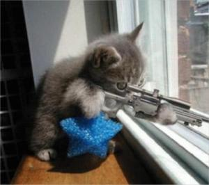 Tueurs à gages chat